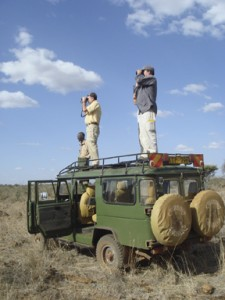 Cheetahs are best observed from the roof of the Land Rover. (Photo courtesy of Wayne Clough)