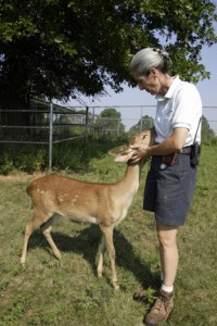 Dolores Reed reassures Claire, an Eld's deer. Eld's deer are native to Southeast Asia, and habitat destruction has made them an endangered species. Eld's deer are extremely excitable and when disturbed will run about erratically, bumping into any obstacles in their path. Keepers at CRC —which houses a 50-member herd — have acclimated the deer to accept strange noises (such as cars, lawnmowers and music) without becoming excited and injuring themselves. They are also taught to enter open doors they reach, which makes it easier for keepers and vets to interact with the animals in a stress-free environment. (Photo by Mehgan Murphy)
