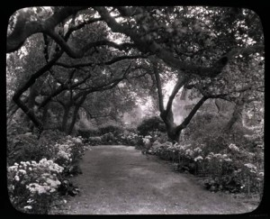Glass lantern slide of garden in Pasadena, California, ca. 1930, from the Garden Club of America Collection at the Archives of American Gardens
