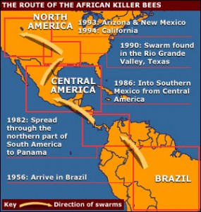 This map shows the migration routes of Africanized honeybees since 1957.