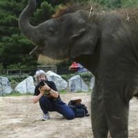 Jessie Cohen photographs a baby Asian elephant