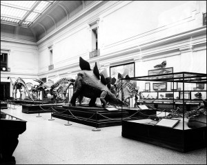 """The Paleontology Hall (or Dinosaur Hall) in the National Museum of Natural History, ca. 1932. At the time of this picture the exhibit was called the """"Hall of Extinct Monsters."""""""