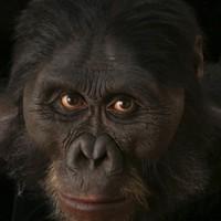 hyper-realistic busts of human ancestors