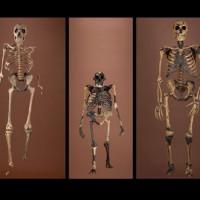 An evolutionary comparison