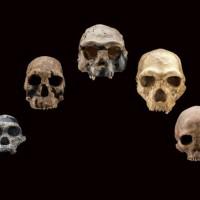 Five fossil human skulls