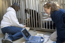 Zoo staff perform an ultrasound on giant panda Mei Xiang to look for a possible fetus. (Photo by Mehgan Murphy)