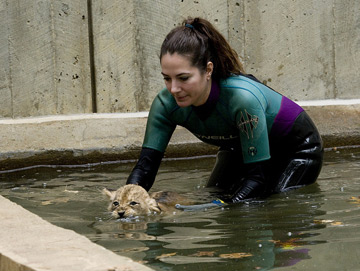 Kristine Clark helps a cub navigate the moat. (Photo by Mehgan Murphy)