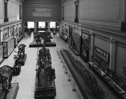 Diana surveys the paleontology hall in 1930. Hornblower and Marshall, the architects of NMNH, approved her location on the east wall. (Image courtesy of Smithsonian Archives)