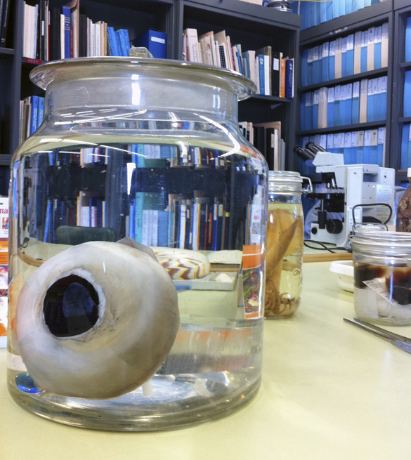 giant-squid-eye-655-(1)