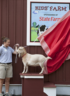 Lucy, a Nigerian dwarf goat, reveals State Farm Insurance as the sponsor of Kids' Farm. (Photo by Mehgan Murphy)