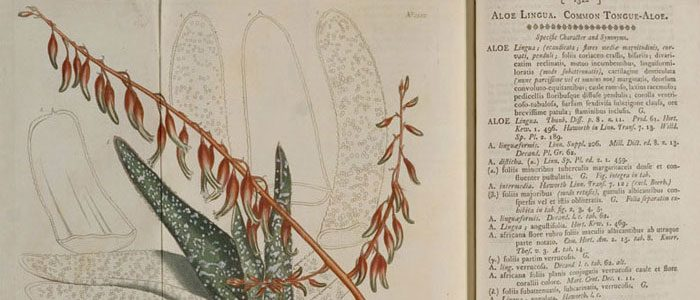 Botanists agree to loosen Latin's grip