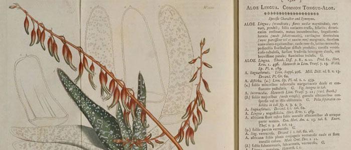 Botanists agree to loosen Latin's grip