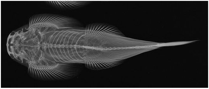 """""""X-Ray Vision: Fish Inside Out"""""""