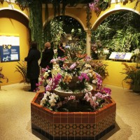 Orchids of Latin America