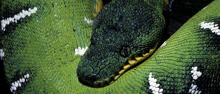 Note to St. Patrick: Leave the snakes alone, please!
