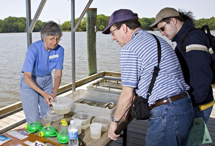 A volunteer at the Smithsonian Environmental Research Center explains how oysters in the Chesapeake Bay  are affected by water quality.