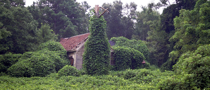 Attack of the killer kudzu!