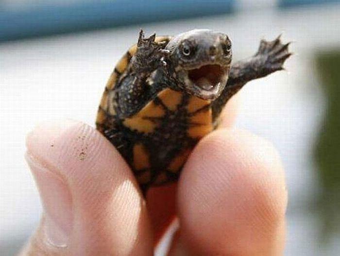 Happy baby turtle is happy. Via http://www.tehcute.com