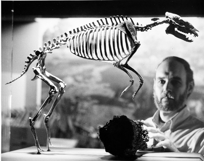 Robert Emry and Hyracotherium Skeleton