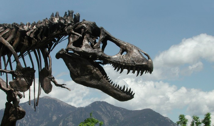 A close-up of the bronze cast of the skull of the Tyrannosaurus rex skeleton known as the Wankel T.rex which was installed in front of the Museum of the Rockies at Montana State University in Bozeman, Montana in 2001.(Photo courtesy Museum of the Rockies)