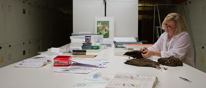Animal CSI: Inside the Smithsonian's Feather Forensics Lab