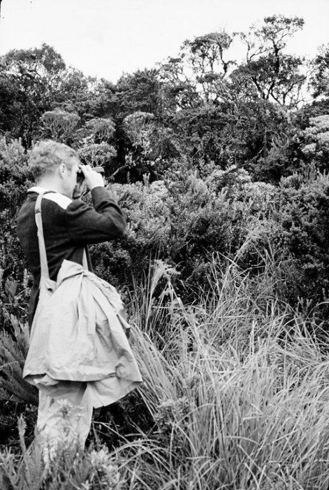 Martin H. Moynihan, conducting field work in the upper woods of Purace Park, Colombia, in June 10, 1969. Moynihan was an ethologist and in 1957 became Resident Naturalist and Director (1959-1973) of a small field station on Barro Colorado Island, Panama, later named the Smithsonian Tropical Research Institute.