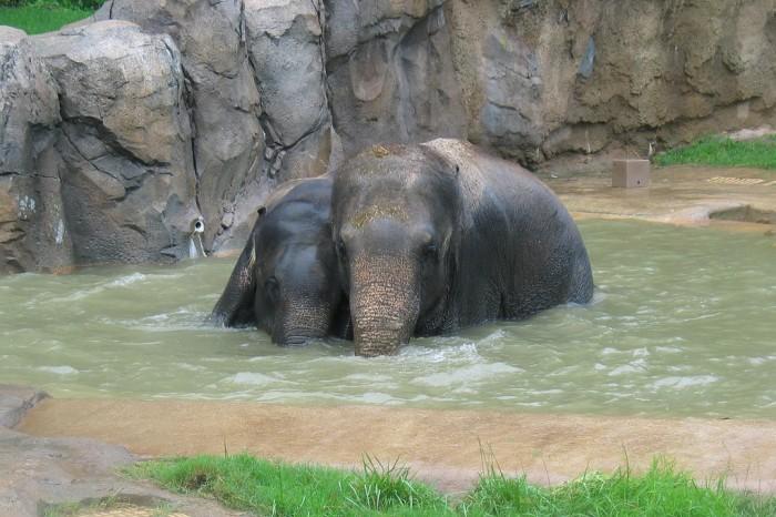 Kandula and Shanthi enjoy a dip.