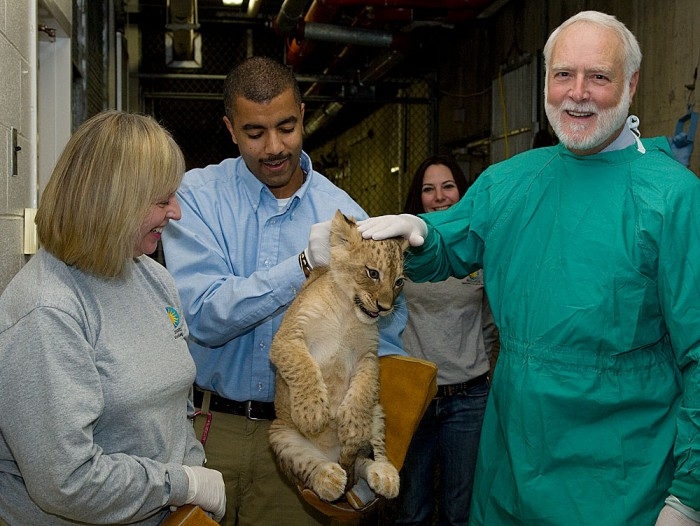 Smithsonian Secretary G. Wayne Clough, right, joins Animal Keeper Karen Abbott, left, and Great Cats Curator Craig Saffoe, center, during one of the Smithsonian's National Zoo's African lion cubs' vet exams. The cub was one of seven born at the Zoo in summer 2010. (Photo by Mehgan Murphy)