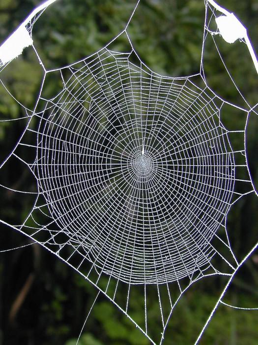 spider-webDSCN0728