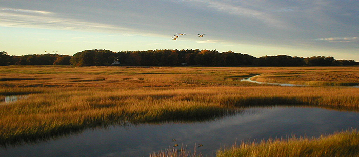 Humans are sinking coastal wetlands