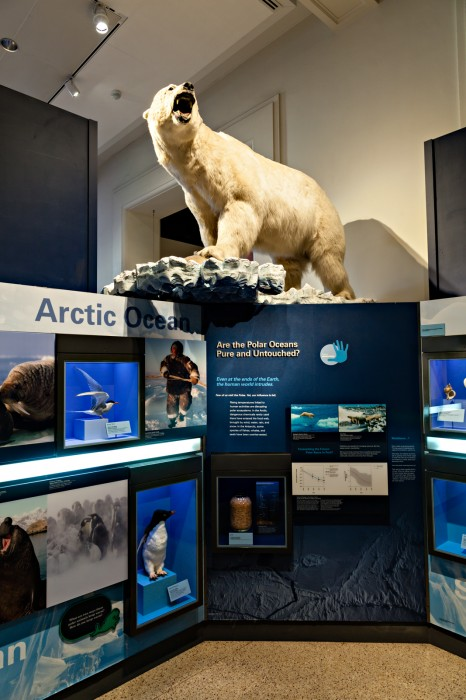 Arctic Ocean polar bear exhibit in the Sant Ocean Hall at the Smithsonian National Museum of Natural History.