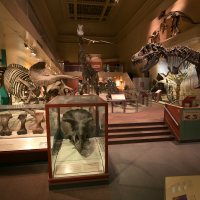 Dinosaur and Fossil Hall, National Museum of Natural History