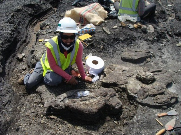Smithsonian intern Catalina Suarez Gomez excavating a fossil in the Cerrejón coal mine in Colombia.