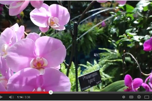 Spring has sprung at Smithsonian Gardens