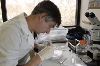 Pierre Comizzoli, Smithsonian, Conservation Biology Institute