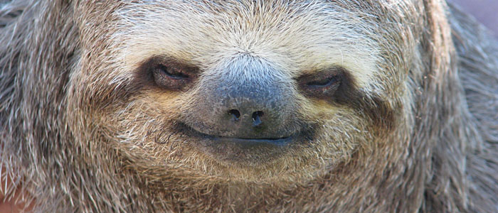 Celebrate Sloth Week at the Smithsonian