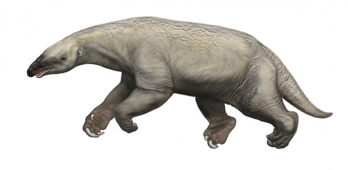 A prehistoric aquatic sloth in a swimming pose. (Illustration by Carl Buell)