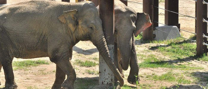 The newest residents of Elephant Trails take a stroll