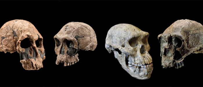 Revising the timeline of human origins