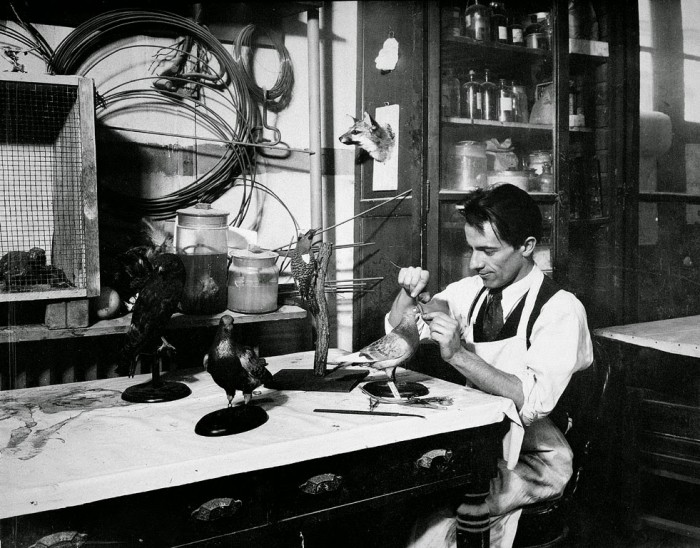 Watson Perrygo at Work, January 19,1933  Smithsonian Institution Archives, 81-13386