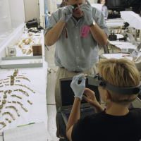 anthropologists Douglas Owsley and Kari Bruwelheide examine the ancient skeletal remains of Kennewick Man during 16 days of study in 2005 and 2006. (Photo by Chip Clark)