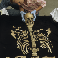 anthropologist Kari Bruwelheide arranges Kennewick Man's remains, which revealed that he was tall for his time and used his wide-bodied frame to navigate the Pacific northwest coast as a traveler and hunter of marine mammals. (Photo by Chip Clark)