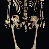 The exceptionally well-preserved skeleton of Kennewick Man is represented by nearly 300 bones and bone fragments. (Photo by Chip Clark)