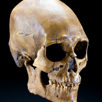 The morphology of the skull and long bones led National Museum of Natural History researcher Douglas Owsley and his colleagues to conclude that Kennewick Man likely shared ancestors with Asian coastal groups, including deep connections with the predecessors of contemporary Polynesians. (Photo by Chip Clark)
