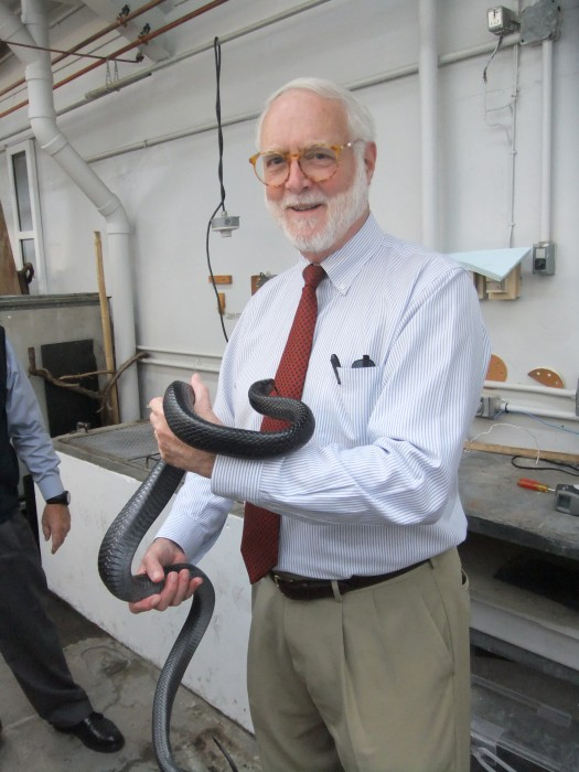 Secretary Clough with an endangered Indigo snake from south Georgia, Sept. 29, 2014. (Photo by Alan Peters)