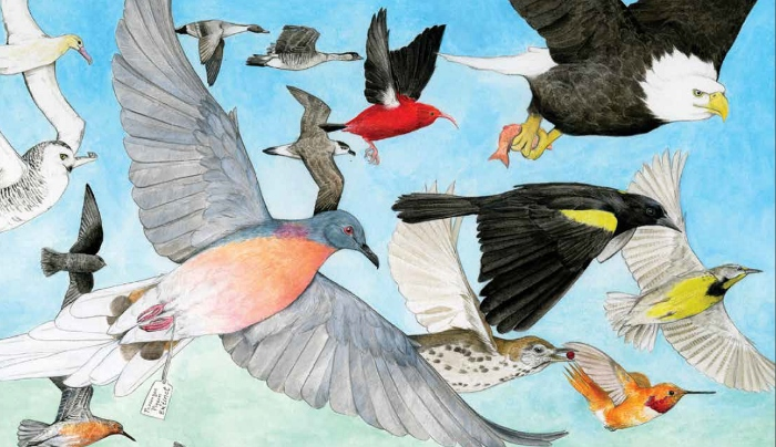 """""""State of the Birds"""" Report Assesses the Health of the Nation's Birds"""