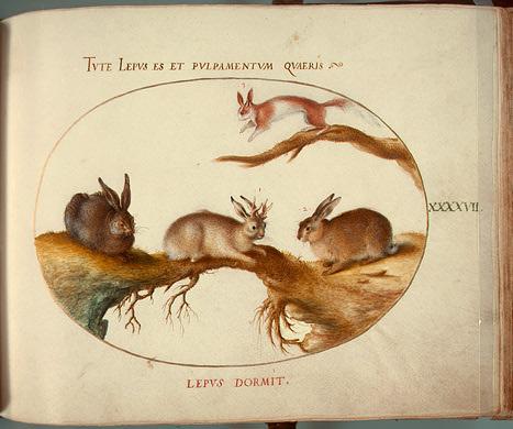 "Plate XLVII of Animalia Qvadrvpedia et Reptilia (Terra) by Joris Hoefnagel, circa 1575, showing a ""horned hare"" (Photo: Wikipedia)"