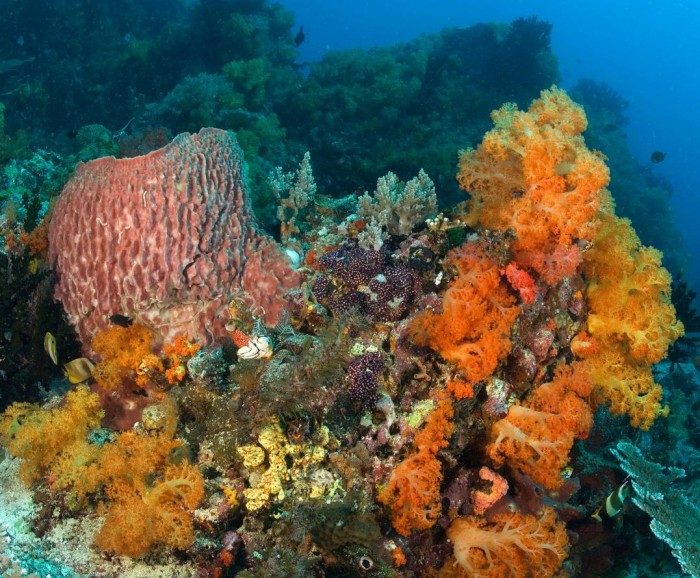 Corals, sponges and seaweeds cover most of the surface of many coral reefs. (photo by Wolcott Henry via the National Museum of Natural History's Ocean Portal.com)