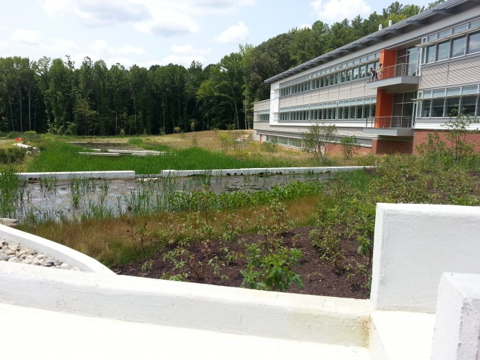 On the south side of the lab, this 4.65-acre constructed wetland acts as rain garden to filter stormwater. The wetland also receives irrigation as part of the lab's system to recycle 100 percent of its water. (Phot by Monaca Noble / Smithsonian Environmental Research Center)