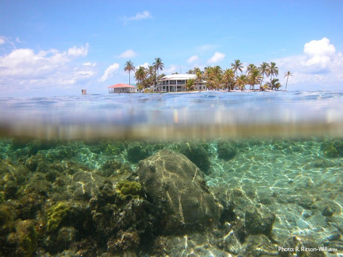 Carrie Bow Cay, Belize, as seen from below the waterline. (Photo by R. Ritson-Williams)